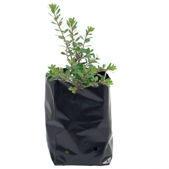 Plastic Nursery Grow Bags
