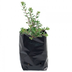 Nursery Plastic Grow Bags